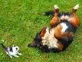 Bernese Mountain Dog Photos.jpg