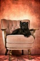 Powderpuff Chinese Crested Dog #12