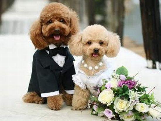 Dog Wedding Wedding Dress Dog Photos